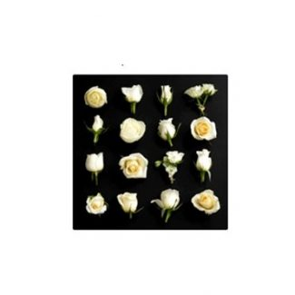16 Cream Roses Canvas Wall Art