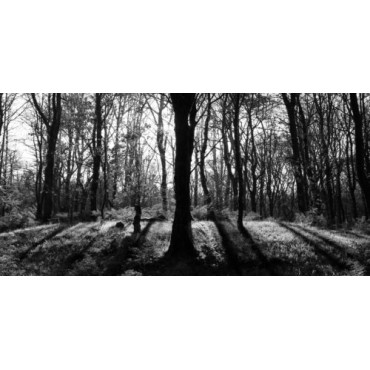 Mono Woodland Canvas