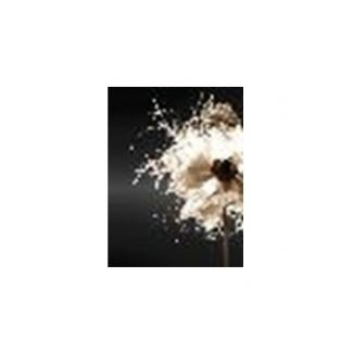 op Chic Black Floral Canvas Wall Art
