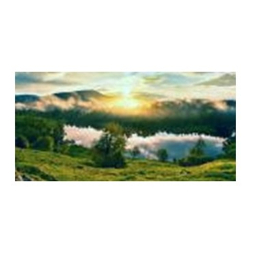 Teal Forest Canvas Wall Art